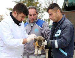 Aksaray Belediyesi Sahip çıktı